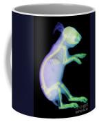 X-ray Of A Rabbit Coffee Mug