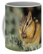 Yellow Pine Chipmunk, Kananaskis Coffee Mug