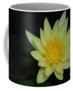 Yellow Waterlily - Nymphaea Mexicana - Hawaii Coffee Mug
