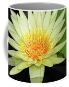 Yellow Waterlily Coffee Mug