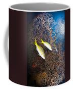 Yellowtail Snappers And Sea Fan, Belize Coffee Mug