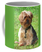Yorkshire Terrier In Park Coffee Mug