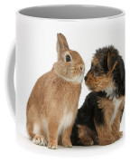 Yorkshire Terrier Pup With Rabbit Coffee Mug