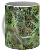 Young Bobcats Coffee Mug by Michael S. Quinton