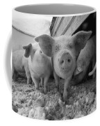 Young Pigs In A Snowy Pen. Property Coffee Mug