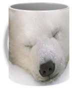 Young Polar Bear With Snow Dusted Coffee Mug