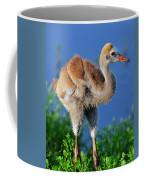 Young Sandhill Crane Coffee Mug