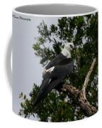 Young Swallow-tailed Kite Coffee Mug