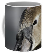 Young Swan Coffee Mug