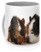 Young Tricolour Guinea Pigs Coffee Mug