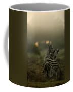 Zebra Equus Burchelli Coffee Mug