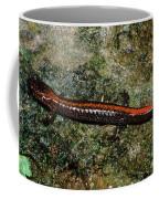 Zig-zag Salamander Coffee Mug