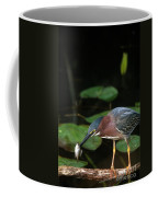 A Green Heron With Fish Coffee Mug