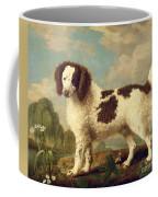 Brown And White Norfolk Or Water Spaniel Coffee Mug by George Stubbs