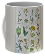 Lithography Of Common Flowers Coffee Mug