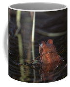 The Common Frog 2 Coffee Mug