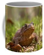 The Common Toad 3 Coffee Mug