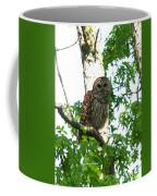 0298-001 - Barred Owl Coffee Mug