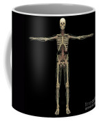 3d Rendering Of Human Lymphatic System Coffee Mug