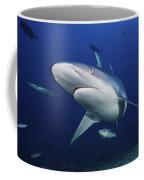 A Large Silvertip Shark, Fiji Coffee Mug by Terry Moore
