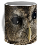 A Threatened Northern Spotted Owl Coffee Mug by Joel Sartore