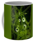Algae Spirogyra Sp., Lm Coffee Mug