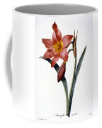 Amaryllis Coffee Mug