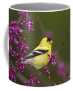 American Goldfinch In Redbud Coffee Mug