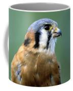 American Kestrel Male Coffee Mug