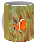 Anemone And Nemoish. Coffee Mug
