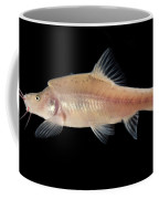 Angled Golden Line Barbel Coffee Mug