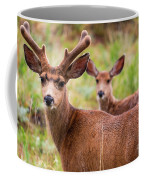 Beautiful Mule Deer Herd Coffee Mug