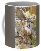 Bighorn Sheep In The San Isabel National Forest Coffee Mug