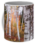 Birch Trees Fall Scenery Coffee Mug