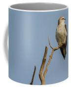 Black Winged Kite  Coffee Mug