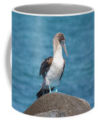 Blue-footed Booby On Rock Coffee Mug