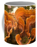Bracket Fungi Coffee Mug