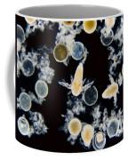 Brine Shrimp Artemia Salina, Lm Coffee Mug