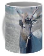 Bull Elk Coffee Mug