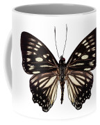 Butterfly Species Euripus Nyctelius Euploeoides  Coffee Mug