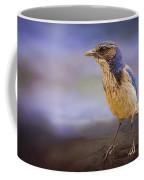 Blue Scrub Jay Coffee Mug