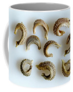Calendula Officinalis Seeds Coffee Mug