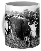 Cattle: Longhorns Coffee Mug