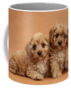 Cavapoo Pups Coffee Mug by Mark Taylor