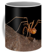 Cave Harvestman Coffee Mug