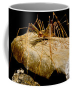 Chinese Cave House Centipede Coffee Mug