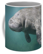 Close View Of A Manatee Coffee Mug by Nick Norman