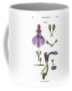 Darwins Orchis Pyramidalis, Illustration Coffee Mug