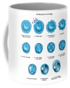 Egg Fertilization Coffee Mug