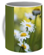 Elegant White Daisies Coffee Mug